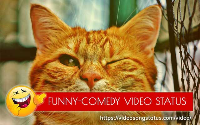Funny - Comedy Whatsapp Status Video