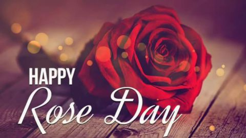Best Romantic Heart Touching Shayari For Love Rose Day Status Video