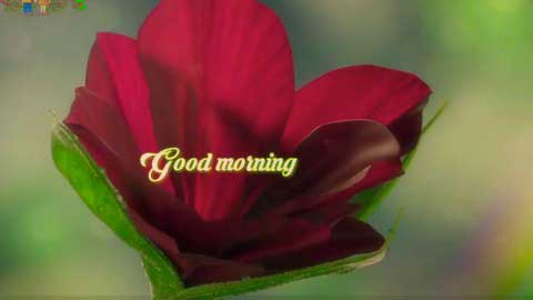 Good Morning Special Flower Whatsapp Status Video Download