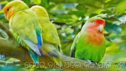 Tote Mo Rana Deli Alo Bai Chadhei Status Video