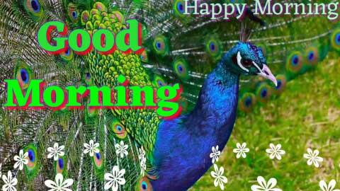 Good Morning Video Whatsapp Status Greetings Wishes