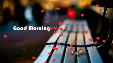 Lovely Good Morning Status Download For Lovers