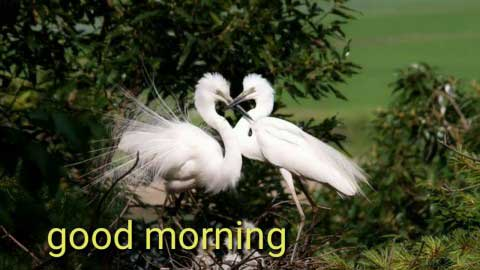 Best Good Morning My Love Video Download