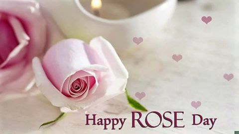 Most Amazing Rose Day Status Video Download