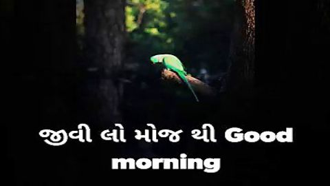 Good Morning Status Video In Gujarati