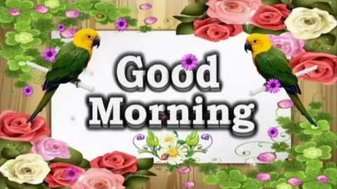 Good Morning Video Whatsaap Wishes
