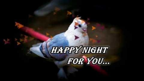 Romantic Good Night Video Whatsapp Status Video