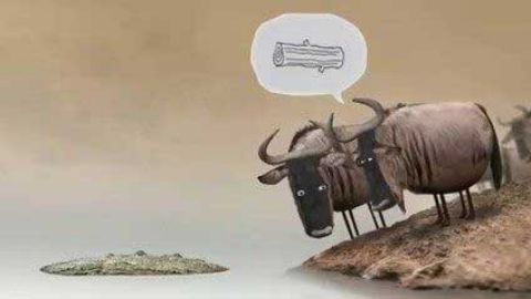 Confused Cows - Funny funny status video in hindi download