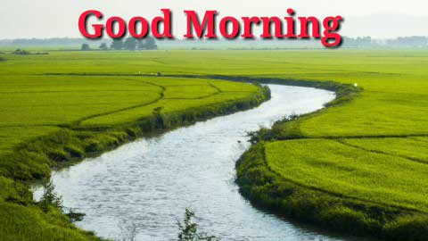 Shayari Good Morning Status Video For Whatapp
