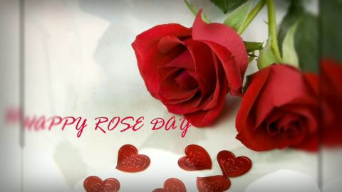 Old Is Gold Rose Day Wishes Video Status Download For Whatsapp