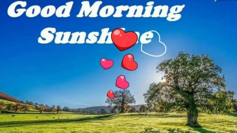 Most Beautiful Heart Touching Morning Wishes Quotes Status For Love Friends