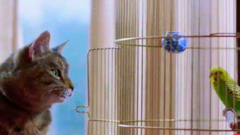 Cat Sing A For Parrot - Funny Sad Song Status Video